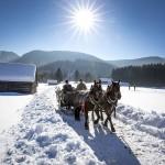 Ausseer Pferdekutsche bei Bad Mitterndorf, Ausseerland - Salzkammergut
